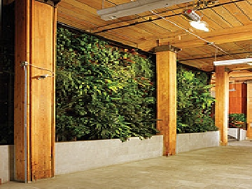 Robertson Building Living Walls