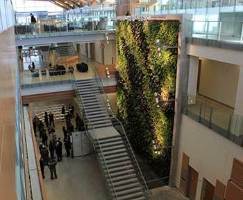 Windsor University Nedlaw Living Wall