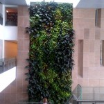 Carleton University Living Wall