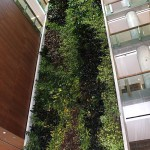 University of Ottawa Living Wall
