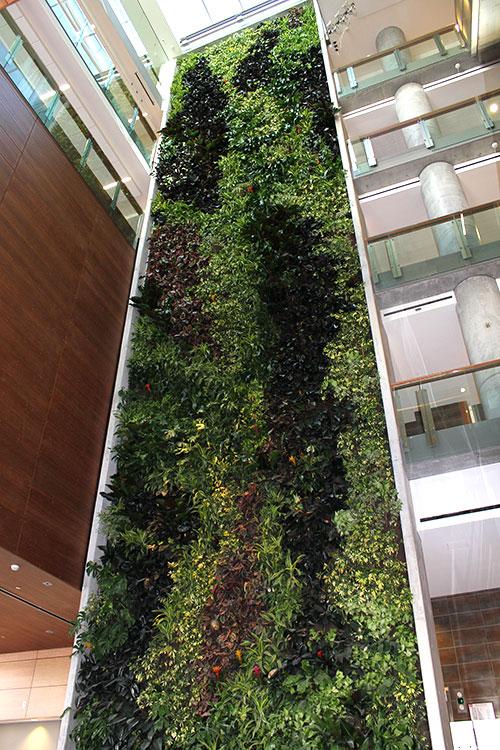University of Ottawa Living Wall